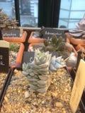 Exposition de Succulents (cactus) dans un jardin botanique Photographie stock libre de droits