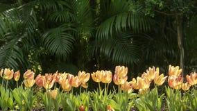 2019 exposition de tulipe de résidence principale de Shilin, Taïpeh, Taïwan images libres de droits