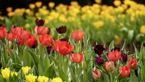 2019 exposition de tulipe de résidence principale de Shilin, Taïpeh, Taïwan photographie stock
