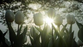 2019 exposition de tulipe de résidence principale de Shilin, Taïpeh, Taïwan photo libre de droits