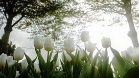 2019 exposition de tulipe de résidence principale de Shilin, Taïpeh, Taïwan photos libres de droits
