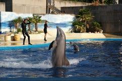 Exposition des dauphins. image libre de droits