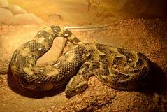 Exposition des serpents Images libres de droits