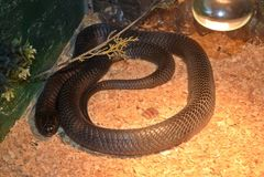 Exposition des serpents Photos stock