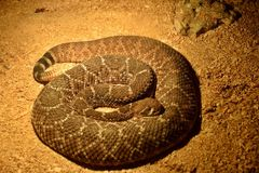 Exposition des serpents Photos libres de droits