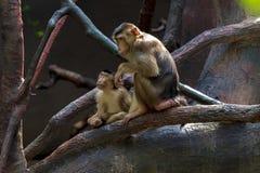 Exposition du zoo de Prague, o? des singes peuvent ?tre vus image stock
