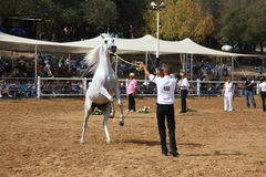 Exposition et championnat Arabes de cheval Photos stock