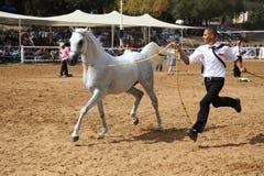 Exposition et championnat Arabes de cheval Photographie stock libre de droits