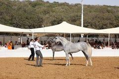Exposition et championnat Arabes de cheval Images libres de droits