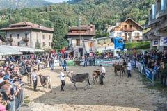 Exposition et concours de bétail à la vallée de Brembana, Serina, Bergame, Lombardia Italie Éleveur et vache brune italienne Photos stock
