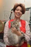 Exposition et distribution des chats d'un abri Photographie stock libre de droits