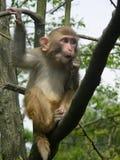 Exposition imitée avec le singe photos libres de droits