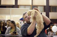 Exposition internationale de chat Photographie stock libre de droits