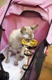 Exposition internationale de chat Image libre de droits