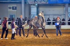 Exposition internationale de cheval Photographie stock libre de droits