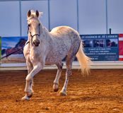Exposition internationale de cheval Image stock