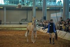 Exposition internationale de cheval Photos stock