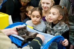 Exposition internationale des chats Images libres de droits