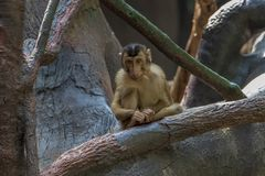 Exposition of the Prague Zoo, where monkeys can be seen. Rainforest Exposition stock photography