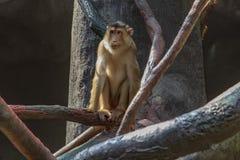 Exposition of the Prague Zoo, where monkeys can be seen. Rainforest Exposition stock photos