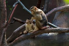 Exposition of the Prague Zoo, where monkeys can be seen. Rainforest Exposition stock image