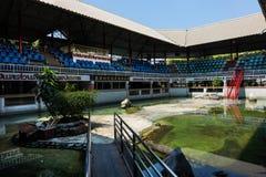 Exposition Samutprkarn Tha de combat de crocodile d'eau de mer de ferme de crocodile Images stock