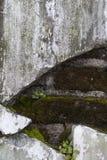 Expossed tegelstenar bak betongväggen Arkivfoto