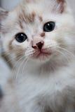 Expresión linda del gatito Foto de archivo