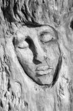 Expresive face carved into the bark of a tree Stock Image