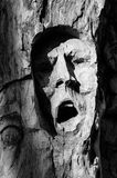 Expresive face carved into the bark of a tree Stock Images