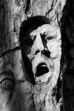 Expresivegezicht in de schors van een boom wordt gesneden die Stock Afbeeldingen