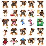 Expressão do Emoticon de Emoji do cão do pugilista Foto de Stock