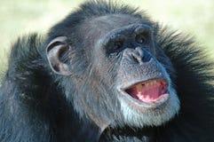 Expressão facial. Foto de Stock Royalty Free