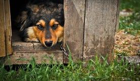 Expressieve hond in houten kooi Stock Afbeelding