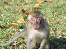 Expression comique de singe Image libre de droits