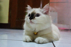 Expression mignonne de chat Image libre de droits