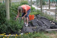 Expressions femelles de jardinier Photos libres de droits