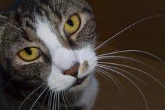Expressive Cat in corner Stock Photo
