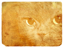 Expressive cat eyes. Old postcard. Royalty Free Stock Photos