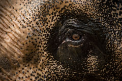 Expressive elephant eye. Stock Photo