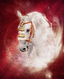 Expressive grey andalusian horse fantasy portrait. Fantasy portrait expressive grey andalusian horse with spanish decoration on red space background;  digital Stock Photography