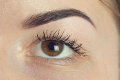 Expressive significant eye perfect shape of eyebrow Stock Photos