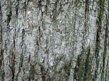 Free Expressive Tree Bark With A Discernible Silhouette Of A Lighter-colored Heart. Stock Photography - 178565822