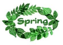 Exprima a mola e o quadro agradável das folhas de sparkles verdes do brilho no fundo branco Foto de Stock