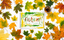 Exprima o outono em um álbum com folhas de outono Foto de Stock