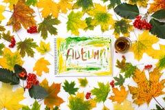 Exprima o outono em um álbum com folhas de outono Fotografia de Stock