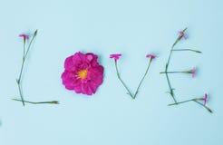 Exprimez l'AMOUR écrit avec l'oeillet et les fleurs roses sauvages Images stock