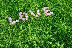 Exprimez l'amour des bourgeons des roses sur l'herbe verte Photos stock