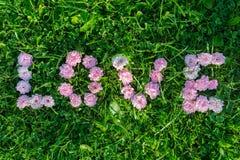 Exprimez l'amour des bourgeons des roses sur l'herbe verte Image libre de droits