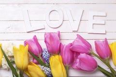 Exprimez l'amour et la frontière du ressort rose, jaune, blanc et bleu Photo libre de droits